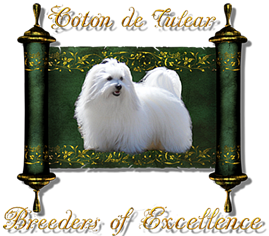 Coton de Tulear Breeders of Excellence