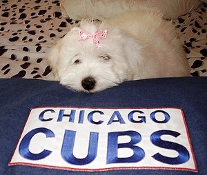 Chicago Fan